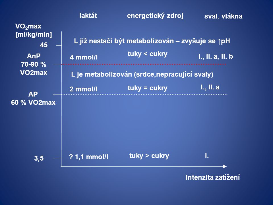 laktát energetický zdroj. sval. vlákna. VO2max. [ml/kg/min] L již nestačí být metabolizován – zvyšuje se ↑pH.